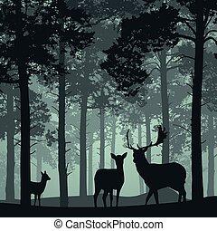 faon, cerf, forêt, profond, biche