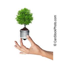 femme, blanc, arbre, lightbulb, sur, vert, main, concept, énergie
