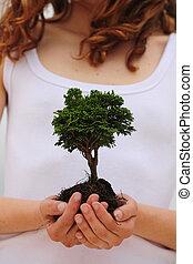 femme, elle, arbre, tenant mains, petit