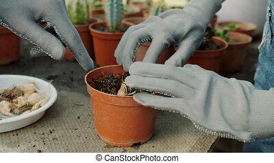 femme, gants, intérieur, oignon, gros plan, mains, fleurs, croissant, plantant ampoules