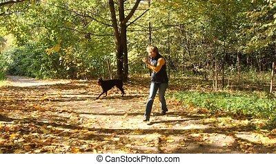 femme, parc, chien, jouer
