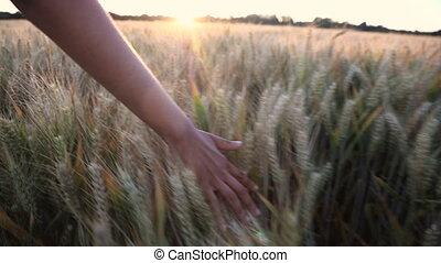 femme, sommet, filles, jeune, récolte, main, champ, coucher soleil, adulte, femme, sentiment, ou, levers de soleil, orge