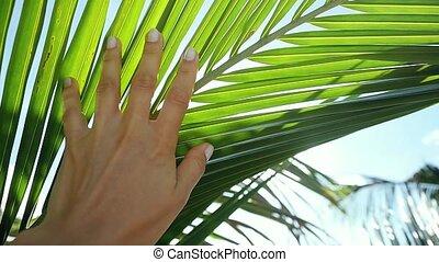 femme tropicale, feuille, soleil, motion., main, lentille, clair, toucher, paume, effets, femme, flamme, sun., apprécier, 1920x1080, lent