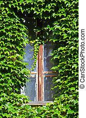 fenêtre, caché, vert, top secret, lierre