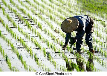 ferme, fonctionnement, paysan