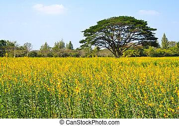 ferme, grand, fleur, arbre, jaune