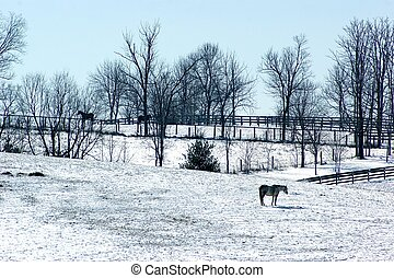 ferme, ky, février, cheval, neige