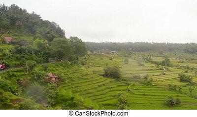 ferme, rural, passé, plantations, route, conduite, luxuriant, riz, campagne, asia., vert, bali, exotique, large, aérien, colline, vue, camions
