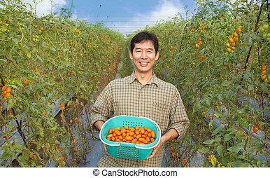 ferme, tenue, tomate, age moyen, heureux, paysan, sien, asiatique