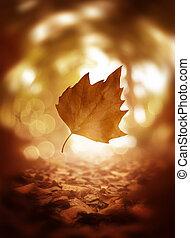 feuille, arbre, haut, automne, fond, fin, tomber