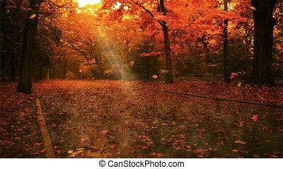feuille, autum, automne