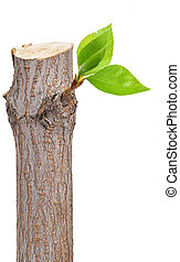 feuille, branche sèche, bourgeons