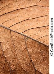 feuille brune, haut, texture, fond, fin