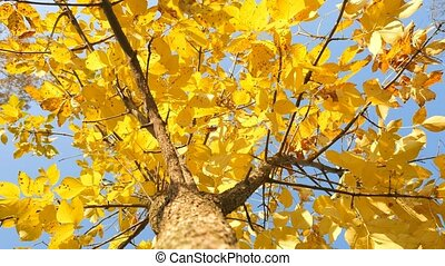 feuille, cimes arbre, arbre, autumn., ciel, jaune, arrière-plan., coffre, coup