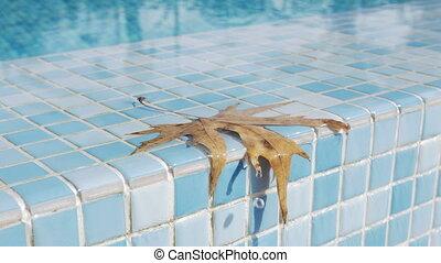 feuille, closeup, mouillé, orange, limite, piscine, natation