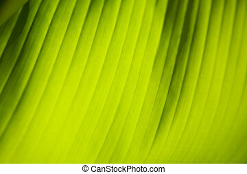 feuille, closeup, vert