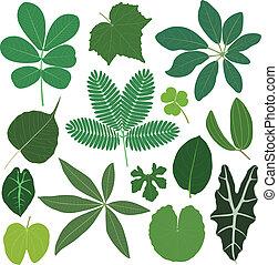 feuille, feuilles, plante, exotique