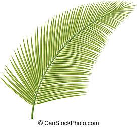 feuille paume, (leaf, tree)