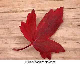 feuille, rouges, automne