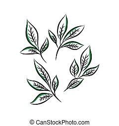 feuille, seamless, illustration, thé, vecteur, pattern., main, dessiné