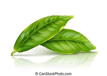 feuille, thé, isolé, arrière-plan vert, blanc