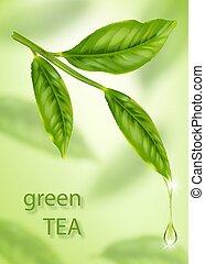 feuille, thé, isolé, bokeh, arrière-plan vert