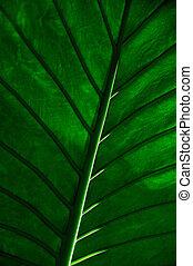 feuille tropicale, tondu