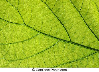 feuille, vert, texture