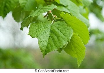 feuilles, arbre, chaux