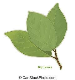 feuilles, aromate, baie