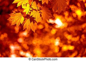 feuilles, automnal