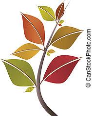 feuilles automne, branche
