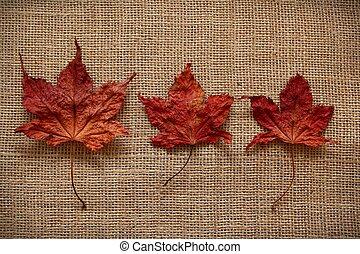feuilles automne, jute, sur, fond