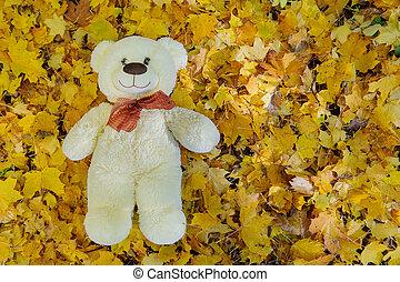 feuilles automne, ours peluche, séance