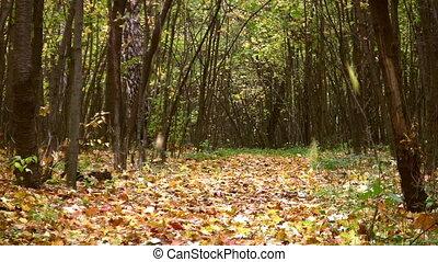 feuilles automne, parc, automne