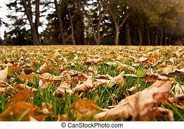 feuilles automne, terrestre