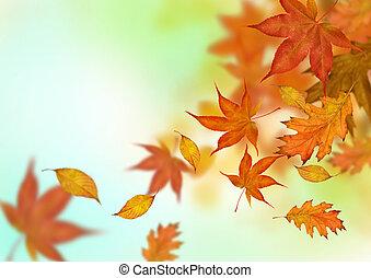 feuilles automne, tomber