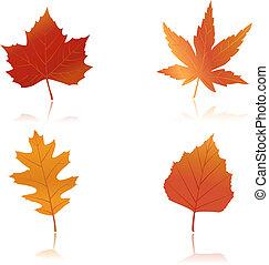 feuilles automne, vibrantly, coloré