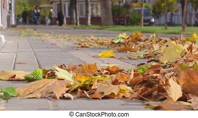 feuilles automne, voler, trottoir, vent