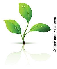 feuilles, branche, pousse, vert