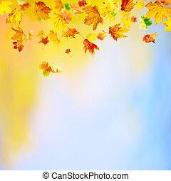 feuilles chute