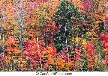 feuilles, couleurs chute, varier