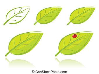 feuilles, ensemble, vecteur, vert