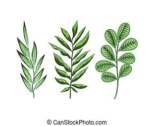 feuilles, ensemble, vert, trois