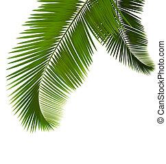 feuilles, fond, paume, blanc