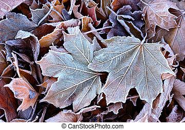 feuilles, gelée, baissé