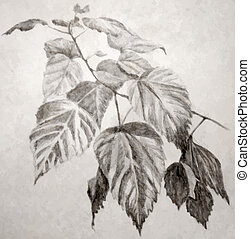 feuilles, illustration, branche