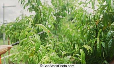 feuilles, jardinier, asperge, homme
