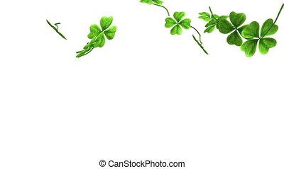feuilles, métrage, tomber, trèfle