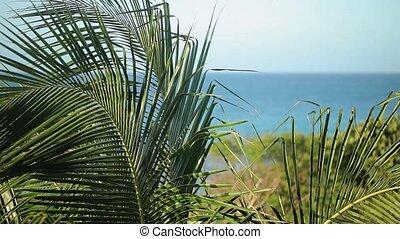 feuilles paume, plage